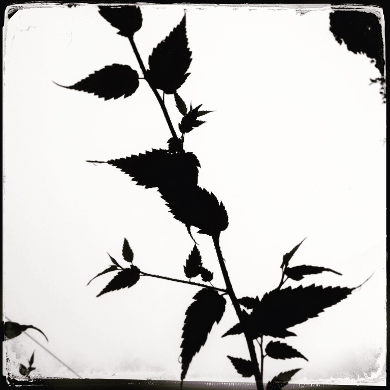 leaveshipstamatic